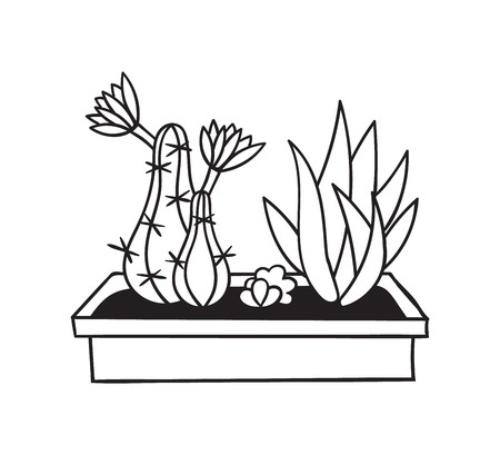 Cactuses with flowers in pot for coloring books. Funny cute cactus with black contour. Mexican plant. Design element for banner, postcard, greeting card, t-shirt. Vector illustration.