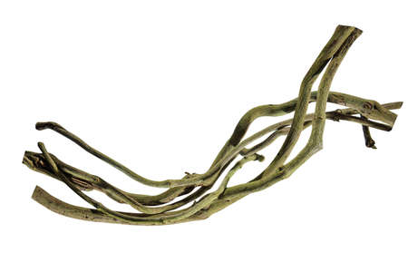 wood root. Spiral twisted jungle tree branch, vine liana plant isolated on white background, nature frame jungle border, Floral Design.