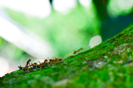 Red ant is very small. Selective focus, free space for text. Stock Photo