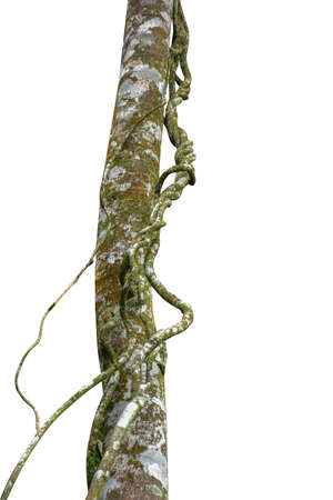 A big tree root overgrown green moss, isolated on white background included. Floral Desaign. HD Image and Large Resolution. can be used as wallpaper
