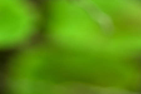 Bokeh green nature, Subtle background in abstract style for graphic design or wallpapers Banco de Imagens