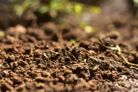 Clean soil for cultivation. The potting soil or peat is suitable for gardening and is one of the four natural elements. The land is life for our planet earth. Selective Focus. Archivio Fotografico