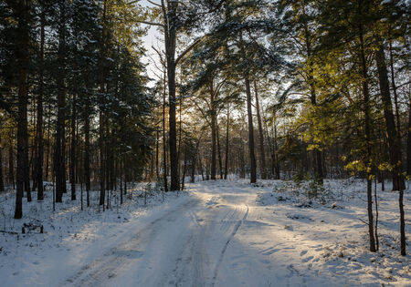 space weather tire: Winter forest road in a magical winter light