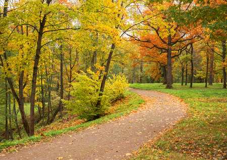 Autumn landscape. Park in fall. Golden autumn. Road in leaves Standard-Bild
