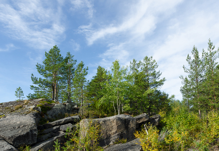 crack climb: Pine trees on the edge of the gorge cliffs