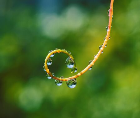 dew drop: Fresh grass with dew drops and Sun beams closeup