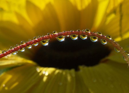 dew drop: Fresh grass with dew drops and Sun beams on large flower background
