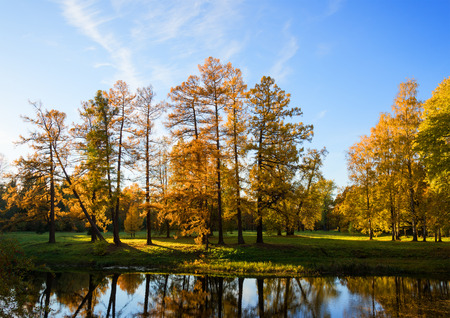 alder: Park in red and orange colors of the autumn season Stock Photo