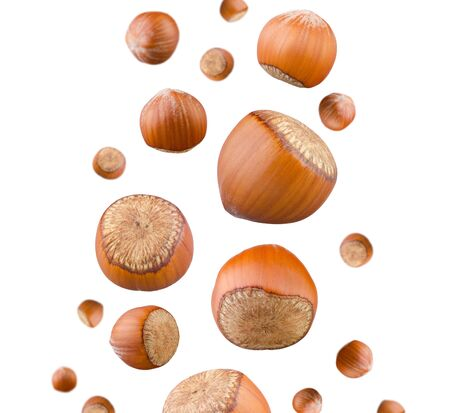Hazelnuts falling isolated on white background. Set of whole nuts flying in air. Ripe hazelnut seeds set. Healthy fat snack, dieting and sport food nutrition concept
