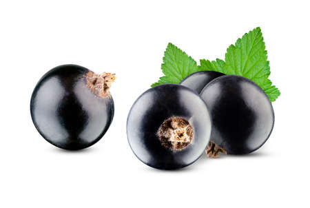 Composition of black currant with leaves isolated on white background. Excellent retouching and detailing, full depth of field Stock Photo