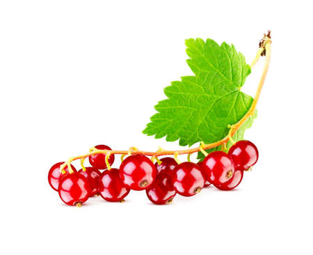 Excellent ripe red currant berries with leaf isolated on white. This image has better resolution and quality. Stock Photo