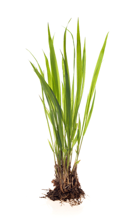 green plant on a white background Stock Photo
