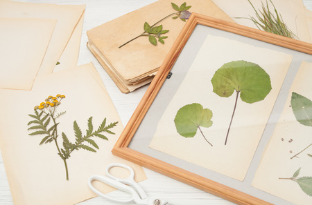 dried herbs and dried flowers for making herbarium, Botanical illustration,European wild ginger