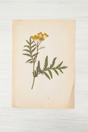botanical illustration: dried herbs and dried flowers for making herbarium, Botanical illustration Stock Photo