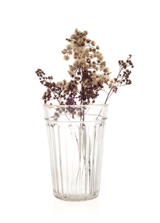 dried flowers in glass on white background isolated