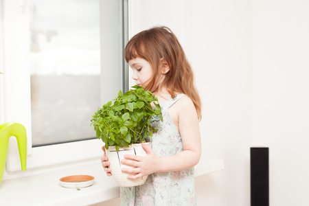 A little girl (3-4 years old) with red long hair looks after the plants at home.