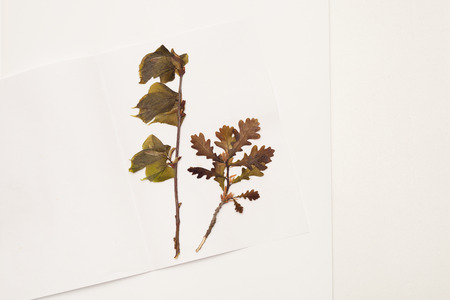 Drafting decorative patterns from dried plants and flowers. Place for text.