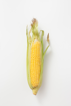 Botanical illustration of a brown ear of corn on white. The view from the top. Stock Photo
