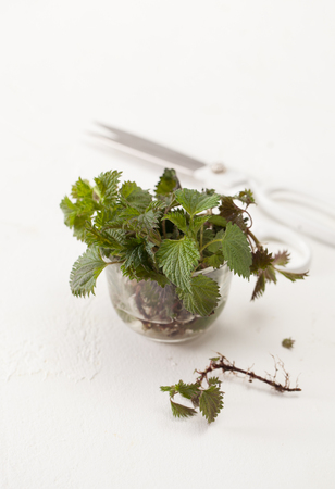 Nettle in the preparation of cosmetics and cooking. Treatment with stinging nettle at home. Copy space text. Stock Photo