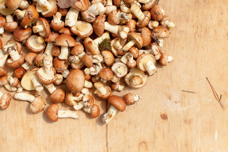 Harvesting mushrooms and pickles for the winter. Place for text. Stock fotó
