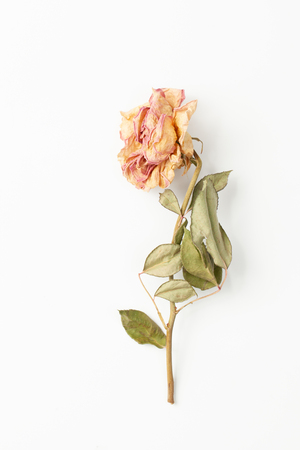 The use of dry rose flower