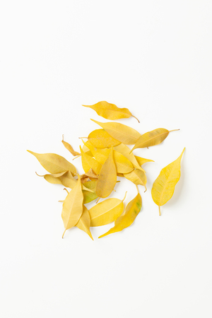 Fallen yellow leaves of indoor plants may be associated with improper care of the plant or pests of indoor flowers.