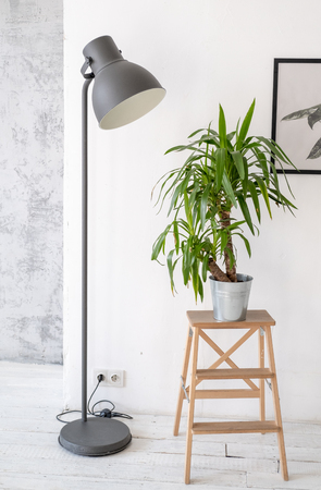 Potted palm plant on a wooden rack in the interior Banque d'images