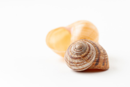 The image of shells. Copy space text