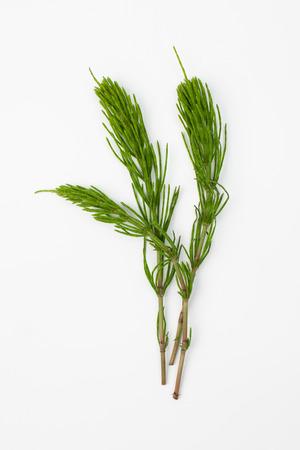 Horsetail grass Banco de Imagens
