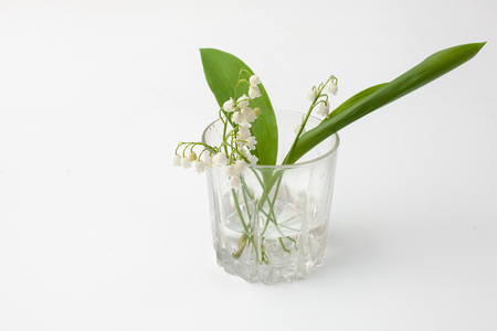 Cut plant Lily of the valley with flowers on a white