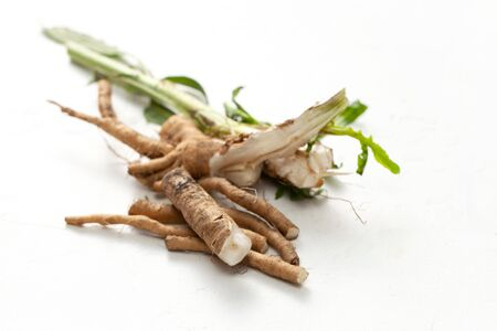 Common chicory root (Cichorium intybus). Chicory root (Cichorium intybus radix) helps to cleanse and strengthen the body, normalize the heart and blood vessels. Stock Photo