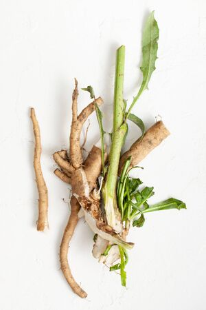 Common chicory root (Cichorium intybus). Chicory root (Cichorium intybus radix) helps to cleanse and strengthen the body, normalize the heart and blood vessels. Top view. Copy space text