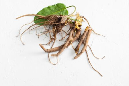 Pack of rhizomes Rumex crispus (yellow dock) with green fresh leaves on white. Top view. Copy space text