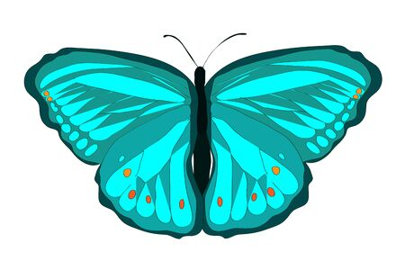 Bright painted simple green butterfly with open wings