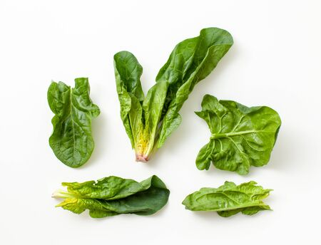 Fresh spinach: marsh grass, patience dock leaves on a white background