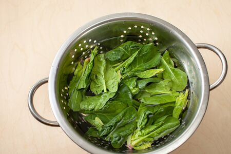 Washing spinach leaves in a colander in the kitchen. Preparation of useful dishes from spinach leaves to increase immunity and treat beriberi 版權商用圖片