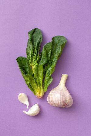Fresh spinach leaves: marsh grass, patience dock and garlic on a purple background