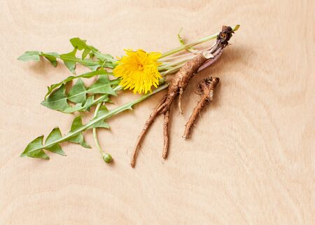 Yellow flower and dandelion leaves with young raw roots on a wooden background for use in cooking, cosmetology and medicine.