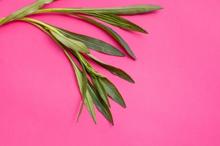A bunch of tarragon twigs and a plant on a bright pink