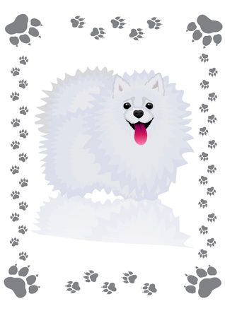 spitz: vector illustration, shaggy, fluffy dog - Spitz, in the frame of the traces Illustration