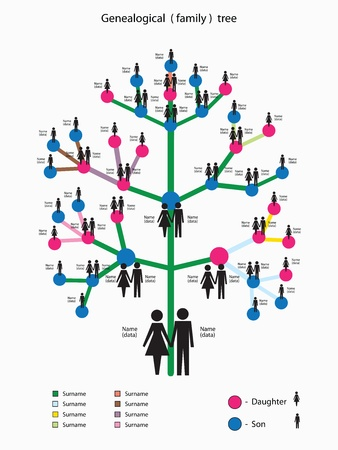 a picture of the genealogical family tree Vector
