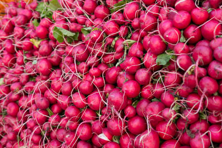 bunched: radishes bunched together at a farmers market Stock Photo