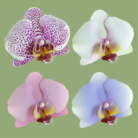 nature one painted: Illustration of 4 isolated flowers of orchids lilac, blue, white, pink