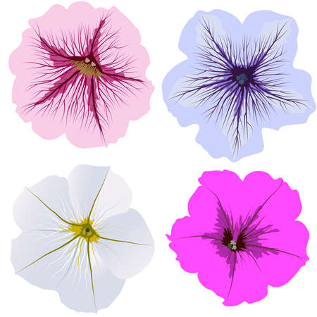 petunia: Set of four petunia flowers, white, pink, blue, magenta