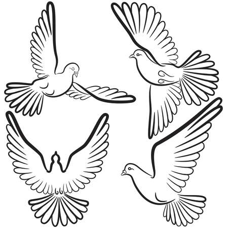 Black and white contours of four pigeons that fly Vector