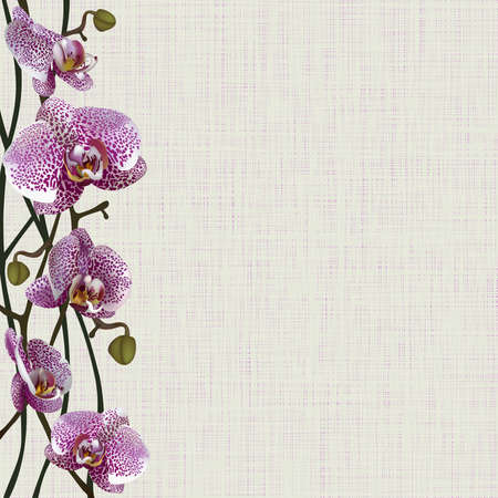 marriage bed: Pale background with purple orchid flowers, stems and buds