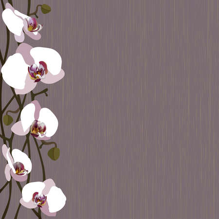 formal garden: Purple background with white orchid flowers, stems and buds
