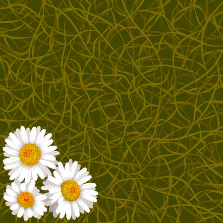 daisy wheel: Green background from grass and flowers of camomile in corner