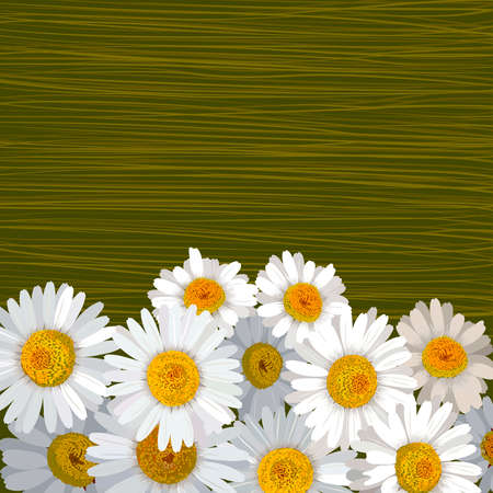 formal garden: Green striped background with many flowers of camomile