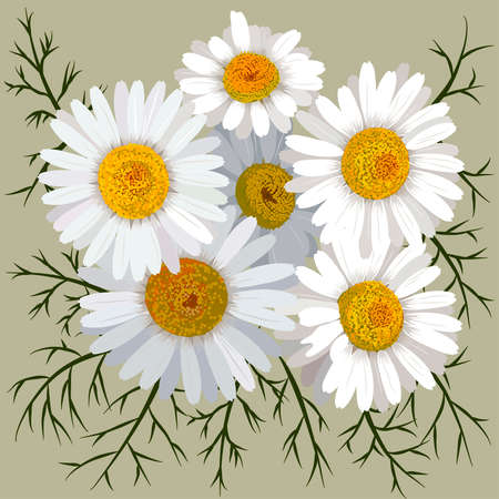 Illustration of camomile flower (chamomile) isolated on color background. Flowers and leaves. Ilustração